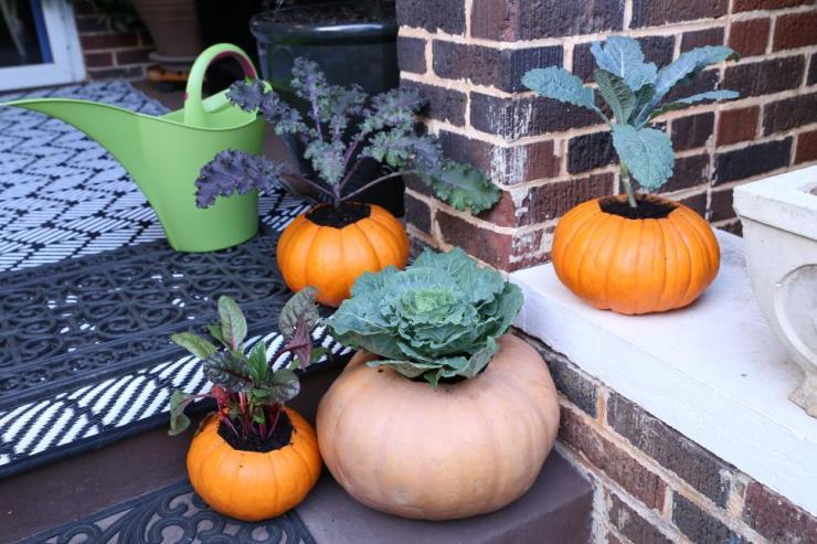 1 pumpkin pot